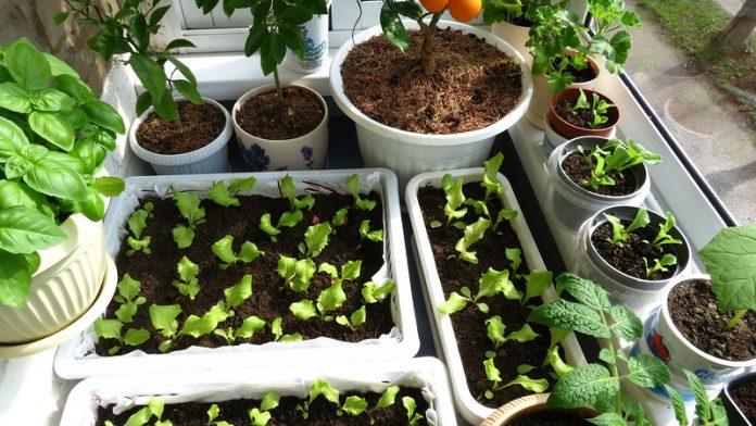 Что сажать в феврале на рассаду - какие овощи