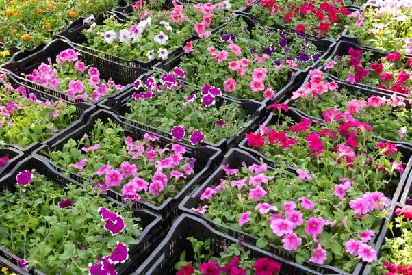 Что сажать в феврале на рассаду - какие цветы